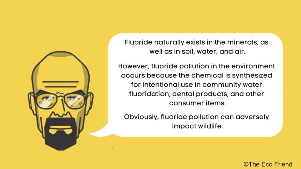 How processed fluoride is harmful for the environment.