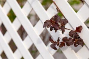 Clean white vinyl fence