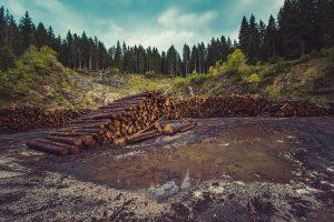 Deforestation for timber production