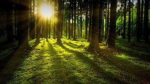 Morning photo of forest